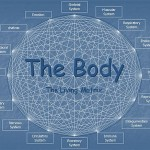 The many connections in the Bodyt
