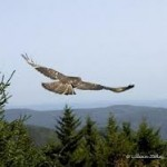 a hawk in flight sees the overview of life